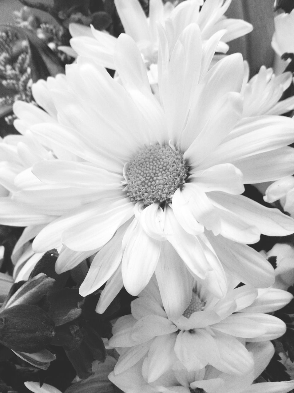 flower, petal, nature, flower head, fragility, beauty in nature, growth, plant, freshness, blooming, no people, outdoors, close-up, day