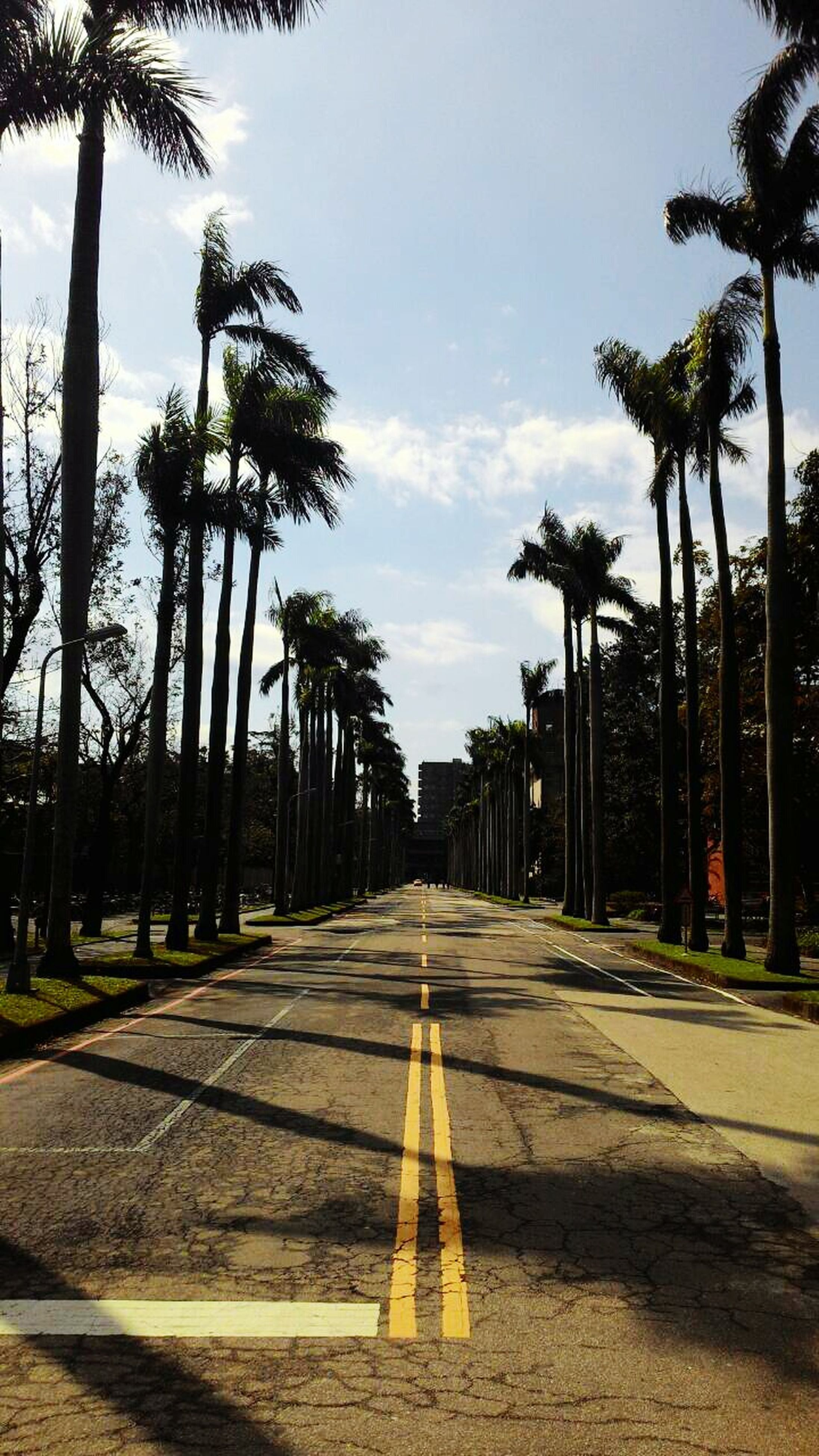 tree, the way forward, palm tree, transportation, road, diminishing perspective, sky, vanishing point, road marking, treelined, street, empty, cloud - sky, tranquility, cloud, growth, outdoors, empty road, nature, long