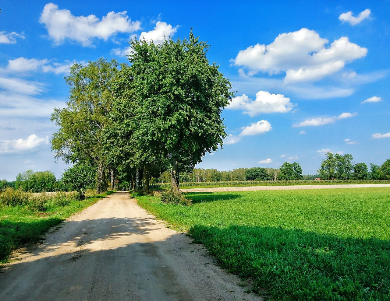 Sky Tree Cloud - Sky Growth Day Sunlight No People Nature Shadow Outdoors Single Tree Grass Road Village Poland Warmia