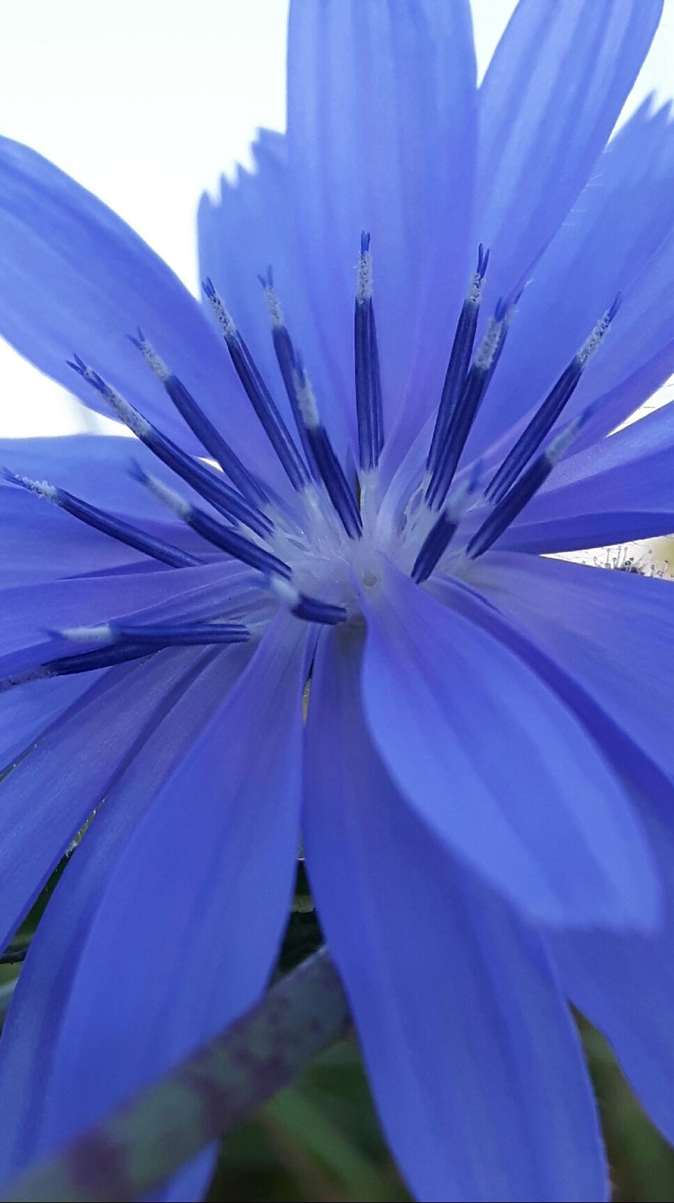 Color Palette True Blue Chicory