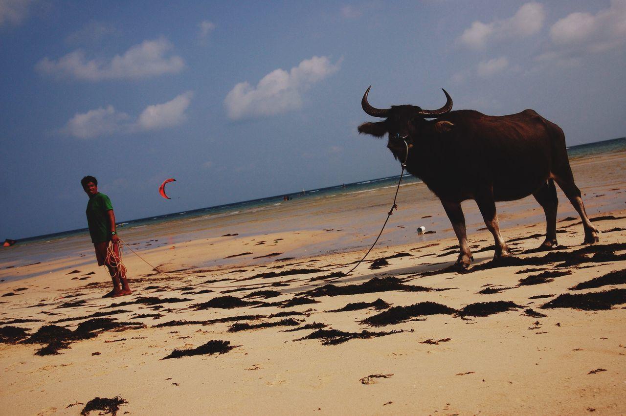 Koh Samui, Thailand 2015. Man with his friend. Beach Domestic Animals Kitesurfing