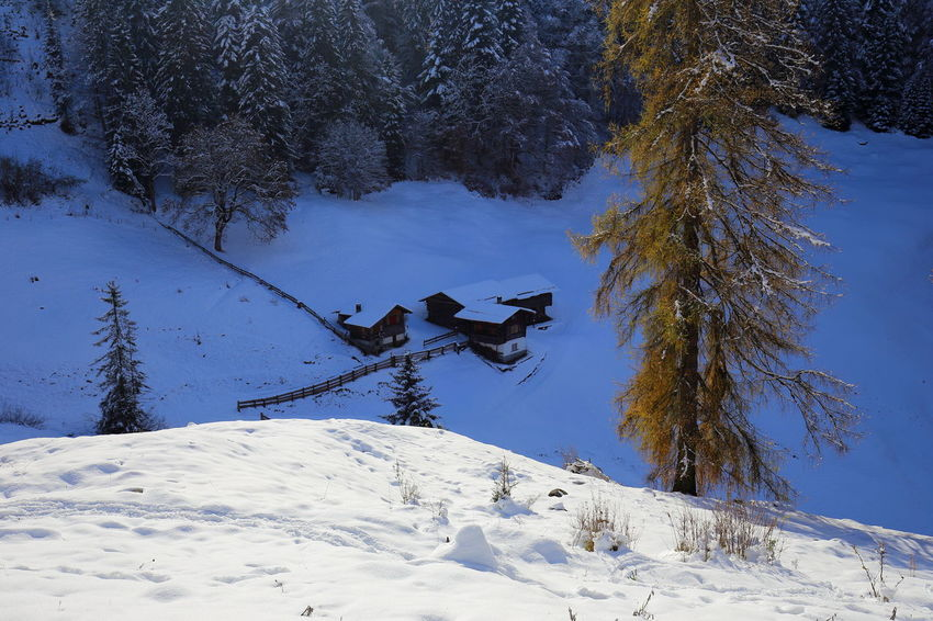 Swiss winterscape. Alps Betterlandscapes Cabin Cold Temperature Eye4photography  EyeEm Best Shots EyeEm Gallery EyeEm Nature Lover Forest Hiking Huts Landscape Larch Tree Nature No People Outdoors Prättigau Remote Scenics Snow Switzerland Tranquility Tree Winter Winterscapes