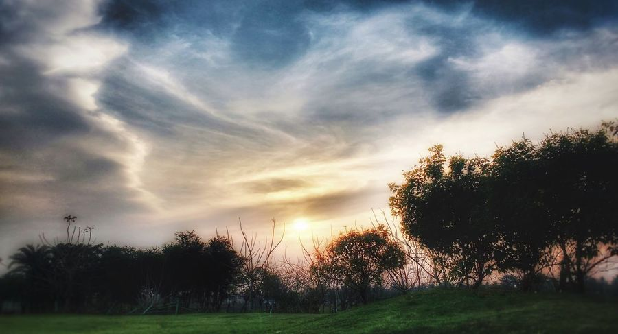 Sunset Sky Tree Cloud - Sky Nature Growth Beauty In Nature Field Scenics Sunset Grass Tranquil Scene TakenOnPhone Edited On IOS No People Landscape Outdoors Silhouette Day