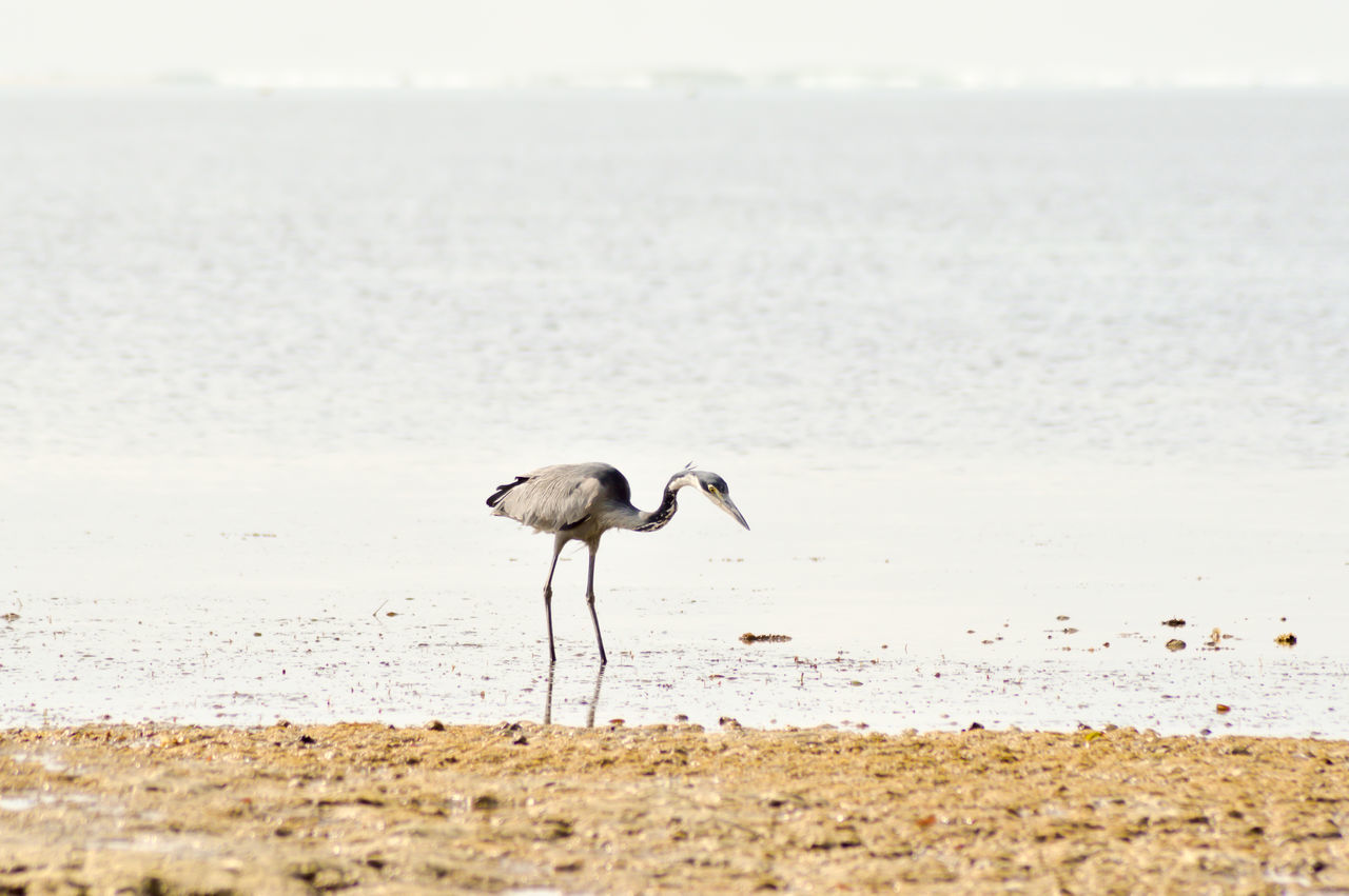 Bird On Beach By Sea