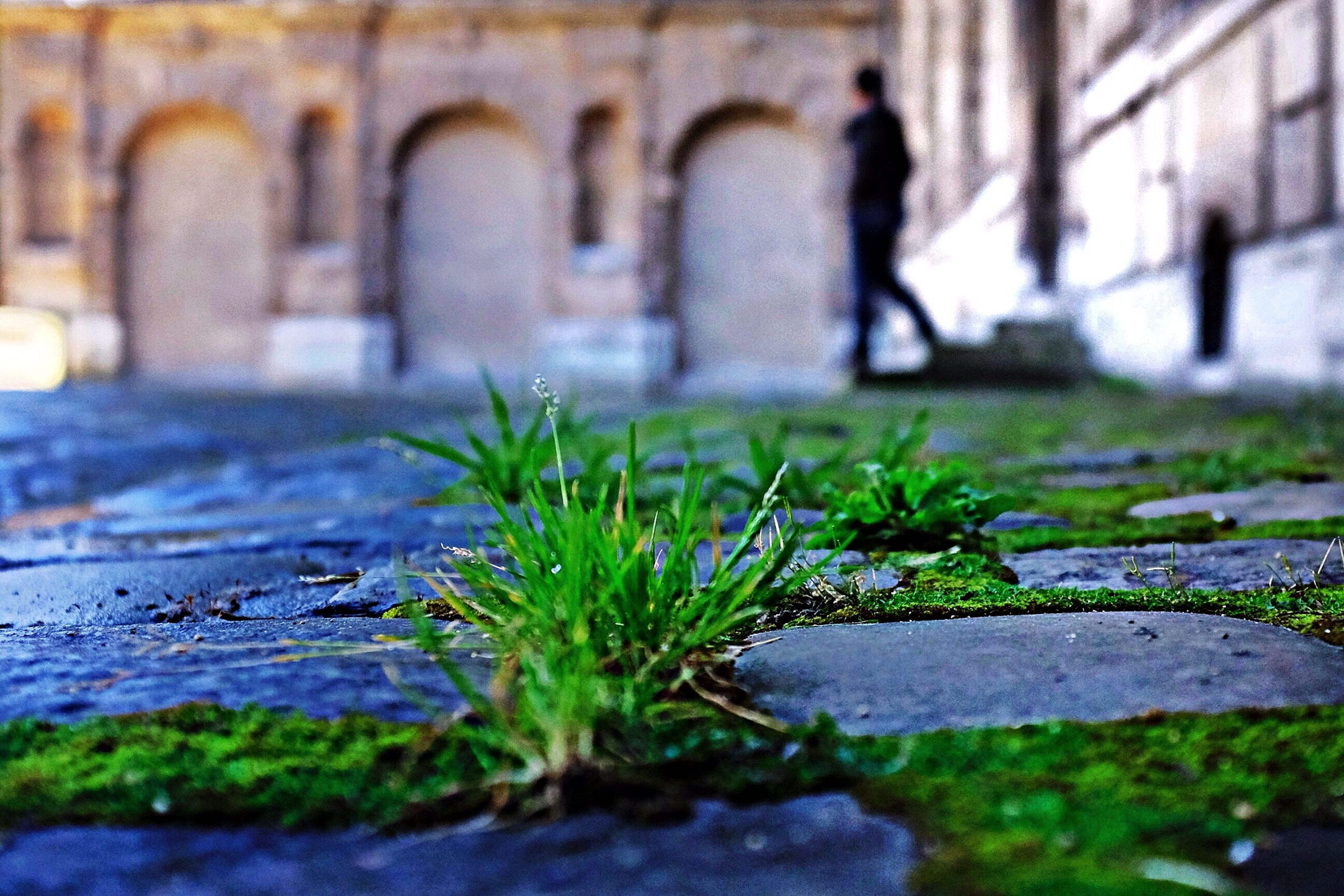 plant, growth, green color, wall - building feature, close-up, outdoors, built structure, sunlight, shadow, focus on foreground, day, selective focus, no people, nature, footpath, wall, leaf, growing, architecture, weathered