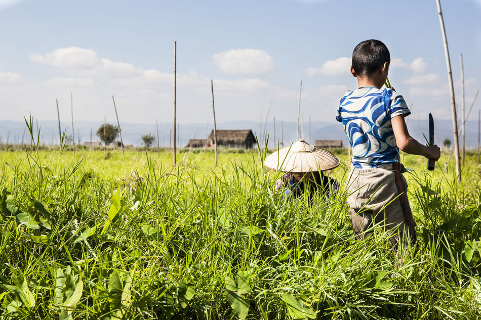 Beautiful stock photos of boy, Agriculture, Boy, Child, Cultivation