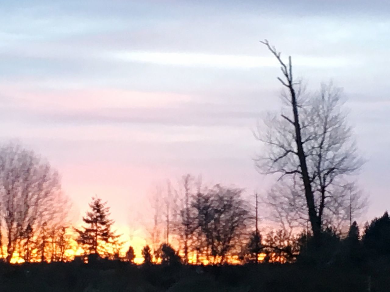 Finding New Frontiers Tree Silhouette Sky Nature Bare Tree Sunset No People Outdoors Landscape Beauty In Nature Day Enumclaw