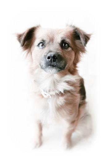 Portrait Lone Dogs Faithful Faith Proud Isolated Lovely Cute Cute Pets Extra Security Trust Long Goodbye Gridlove Pet Portraits