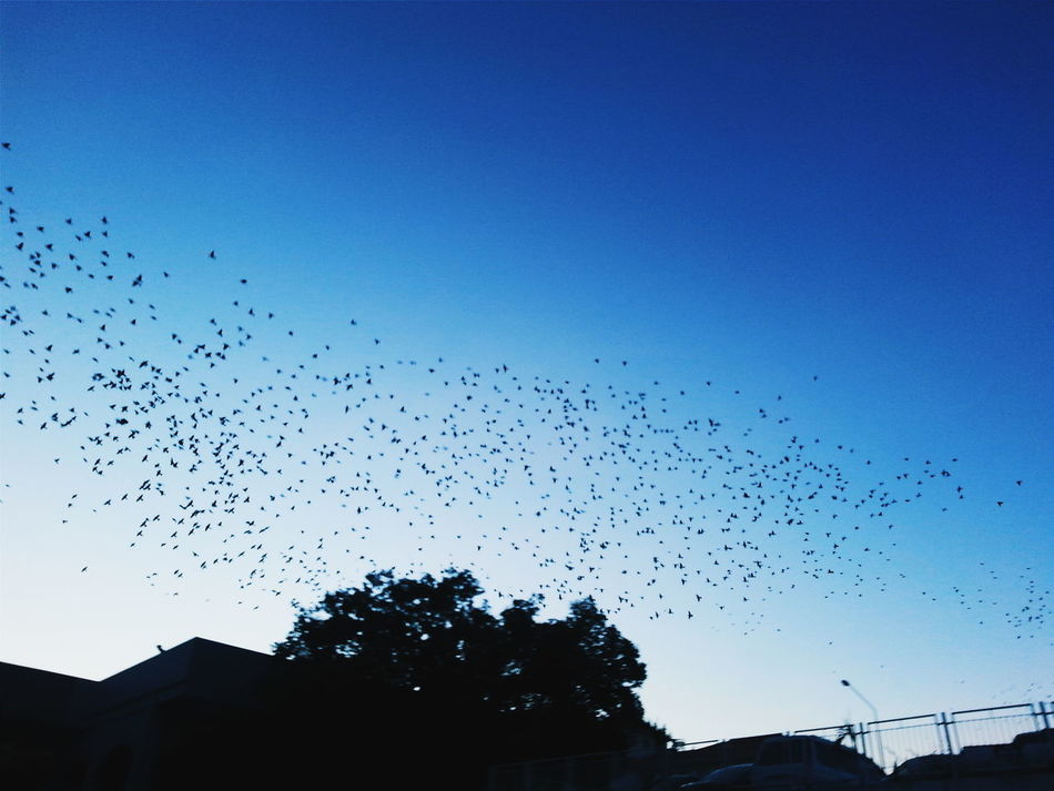 Soar High 🐦 | Captured using Galaxy S3 | Photograph by Ryan See 👑 | Processed by Vsco Dusk Gloomy Birds Soarhigh VSCO Nature Popular Photos Popular Photo Nightphotography