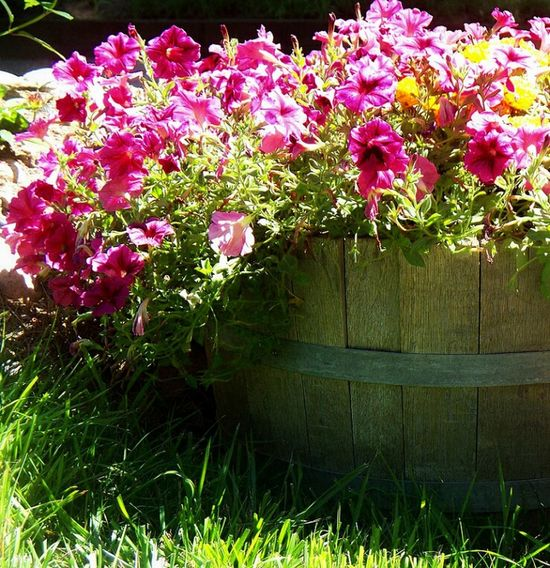 A Cup Runneth Over. Simple Things In Life Flowers Flowers, Plants & Garden Purple Flowers Basket Of Flowers 🌷 Sun And Flowers