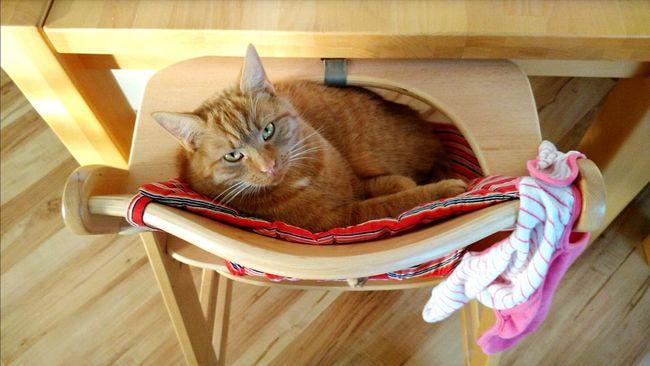 Franzi Don't Disturb Me Whats Up Cat Enjoying Life Hanging Out