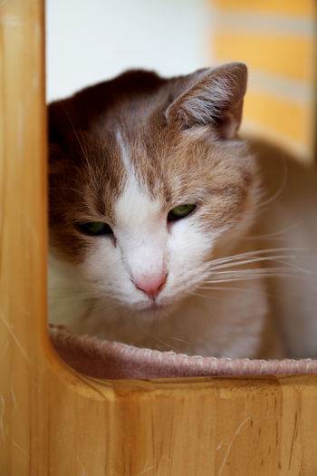 Animal Animal Head  Animal Rescue Center Animal Themes Cat Cat House Cats Changing The Cat Litter Tray Domestic Animals Domestic Cat Green Eyes Looking At Camera Melancholy Cat One Animal Pets Pink Nose White And Yellow