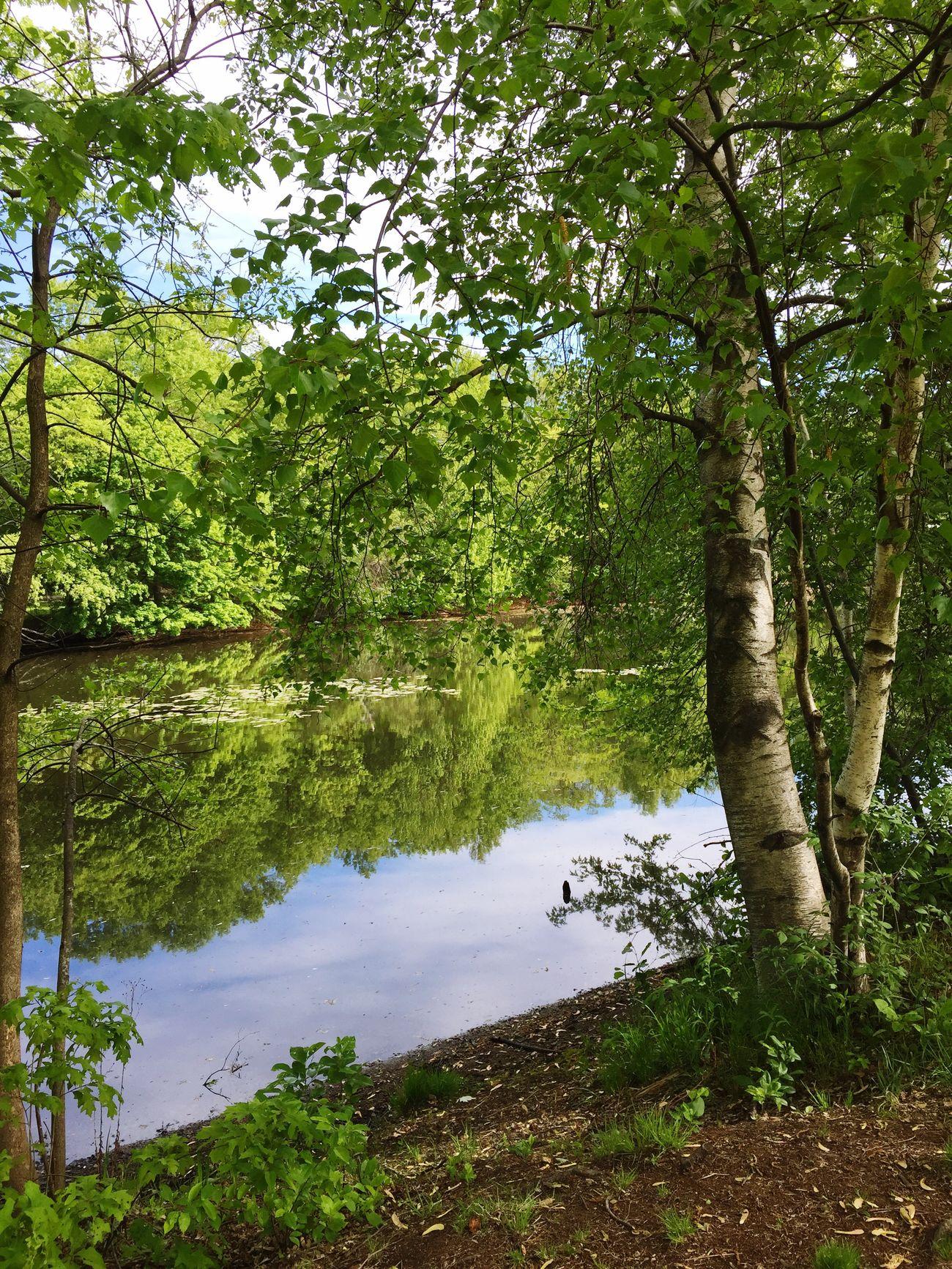 EyeEm Nature Lover Somerville Boston