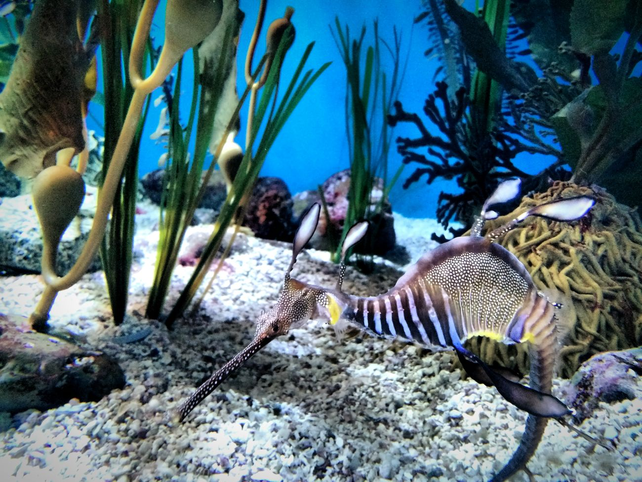 Sea Dragon Aquarium Summer