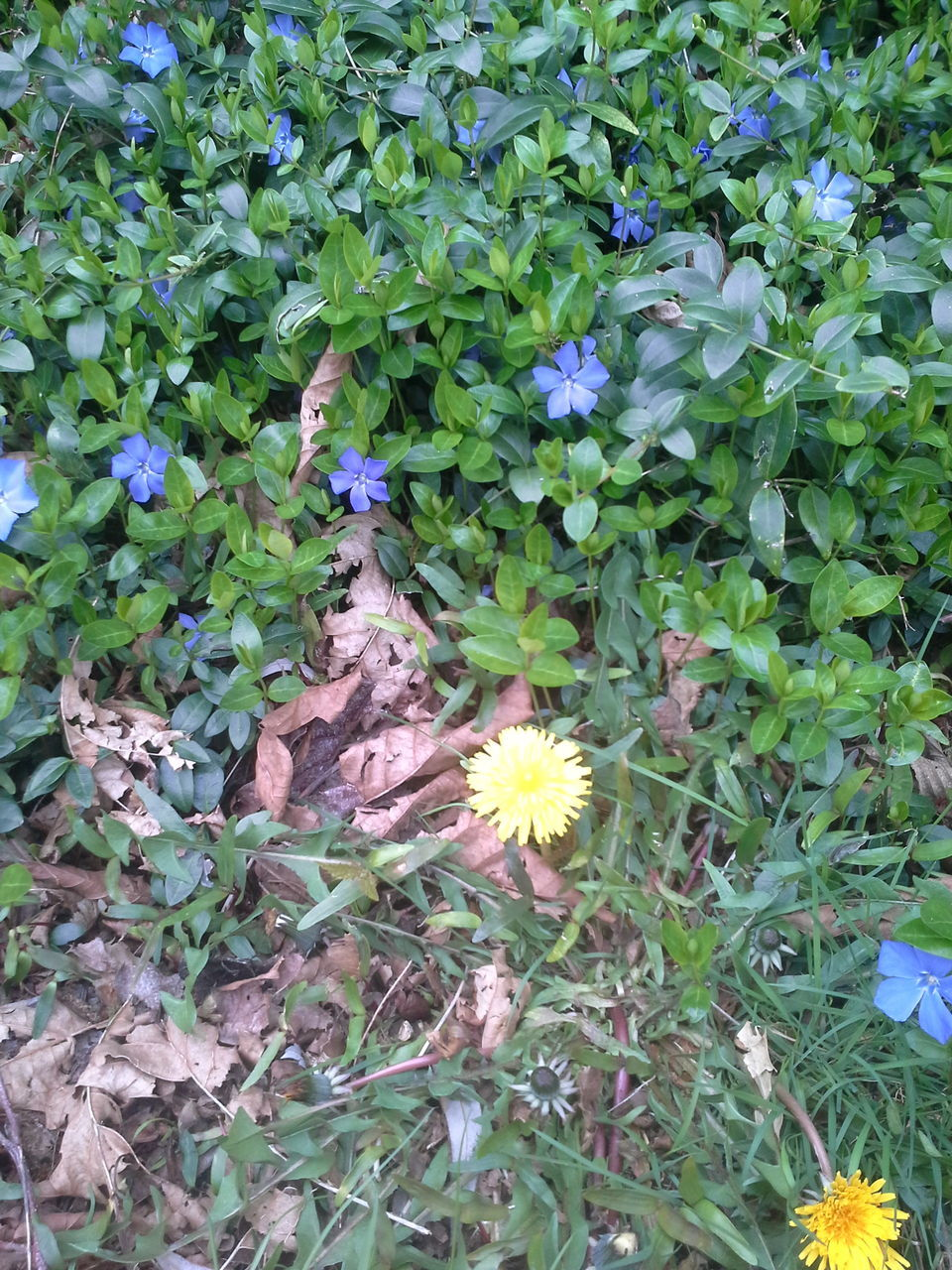 flower, growth, plant, nature, blooming, petal, fragility, spring, leaf, flower head, freshness, no people, outdoors, beauty in nature, day