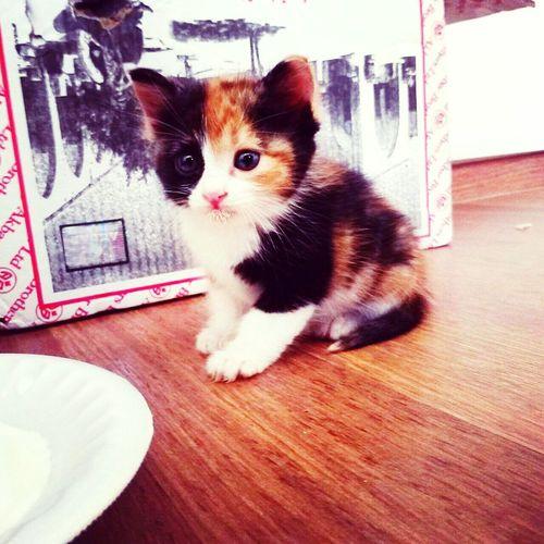 """Pets Corner name is """"miyaaa"""""""