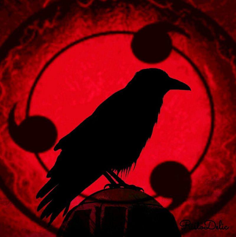 Red One Animal Silhouette Animal Wildlife Bird Black Color Animal Themes Animals In The Wild Raven - Bird Astrology Sign Spooky No People Close-up Science Outdoors Sharingan Eyes  UchihaItachi Naruto Uchiha Sharingan