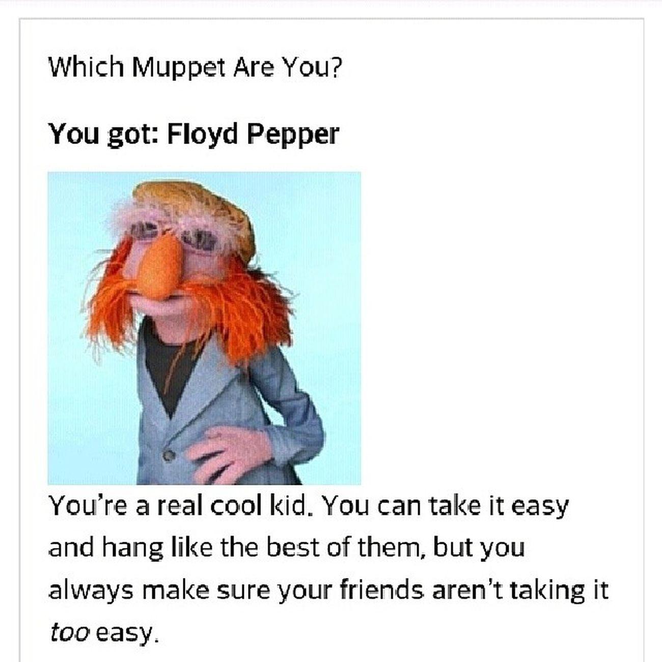 I'm most like Floyd Pepper the bass player of Dr. Teeth and The Electric Mayhem. Muppets Drteeth Electricmayhem
