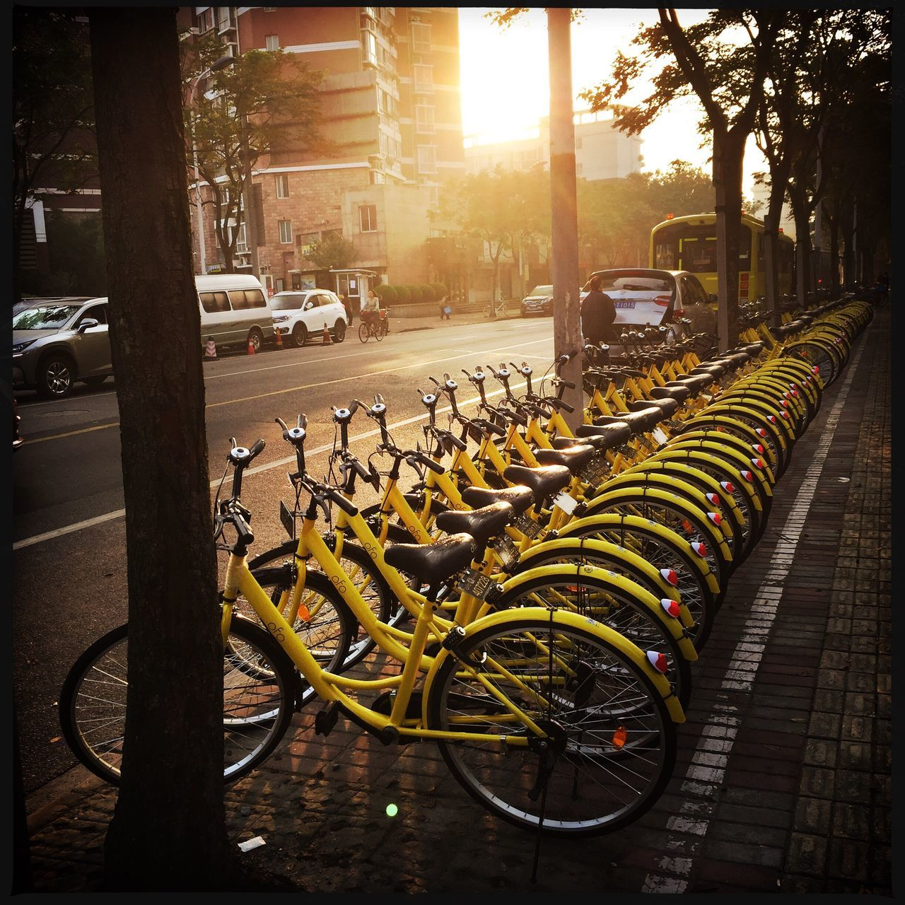 bicycle, transportation, mode of transport, land vehicle, in a row, stationary, parking, bicycle rack, outdoors, car, yellow, day, no people, city, architecture, tree