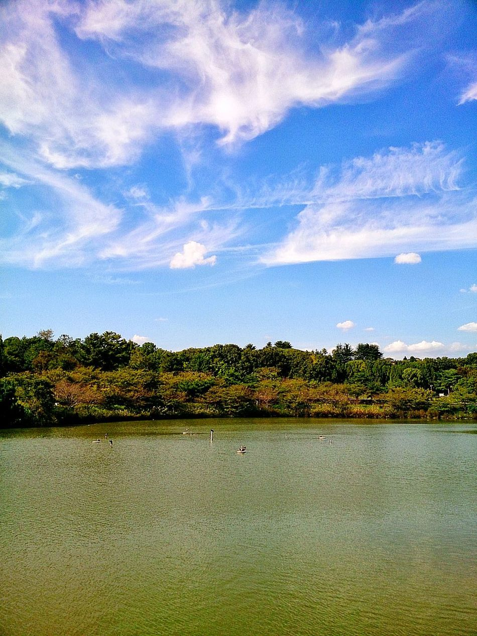 Tree Water Lake Cloud - Sky Blue Sky Nature Day No People Outdoors Beauty In Nature Scenics