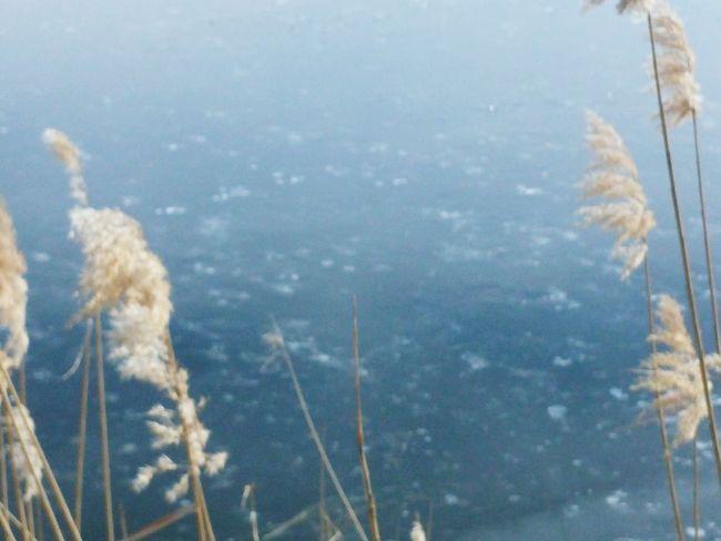 Mogan Lake Winter Lake Frizen ankara,turkey