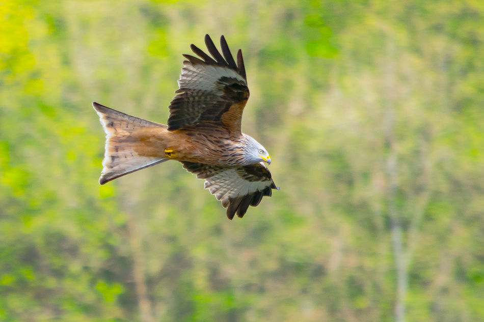 Animal Themes Animals In The Wild Animals In The Wild Beauty In Nature Bird Close-up Flying Bird Focus On Foreground Nature No People One Animal Outdoors Spread Wings