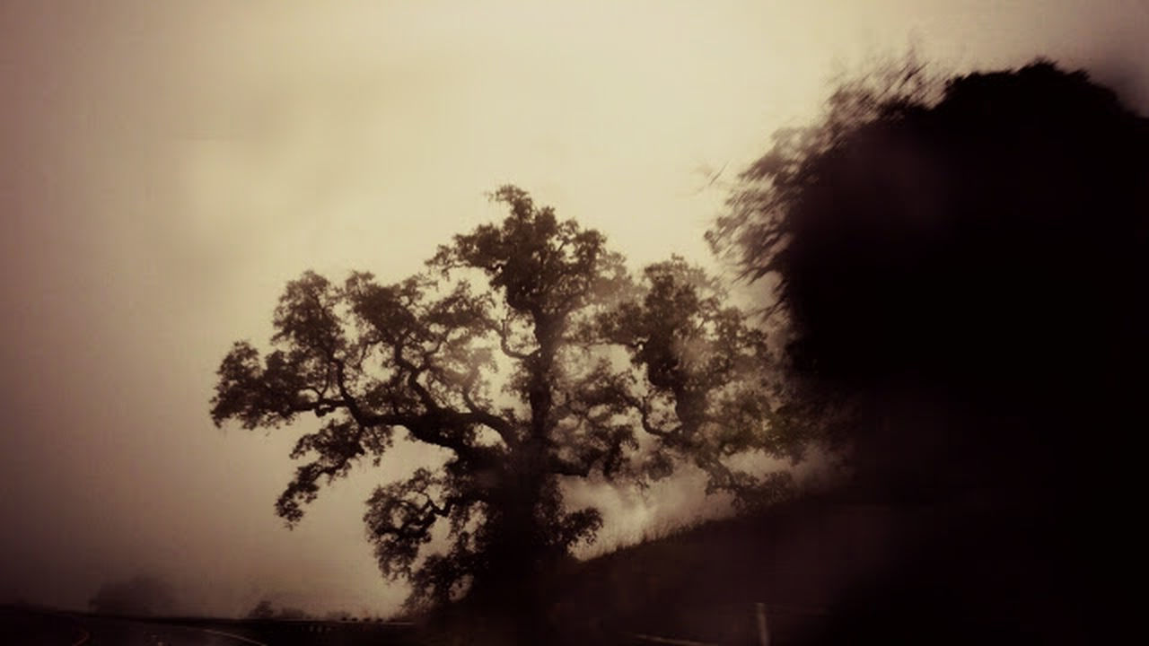 Tree Nature No People Beauty In Nature Northern California Random Acts Of Photography Foggy Night Foggy Landscape Woodscapes Norcal