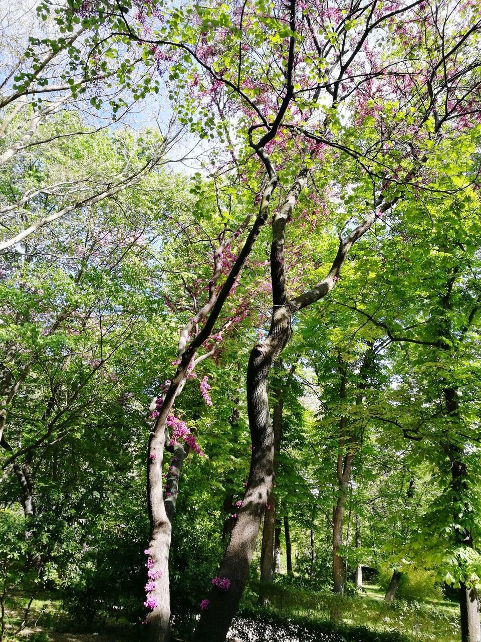 tree, branch, growth, nature, day, green color, tranquility, outdoors, beauty in nature, no people, low angle view, tree trunk