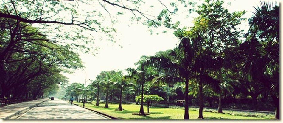 Trees Roads Residency