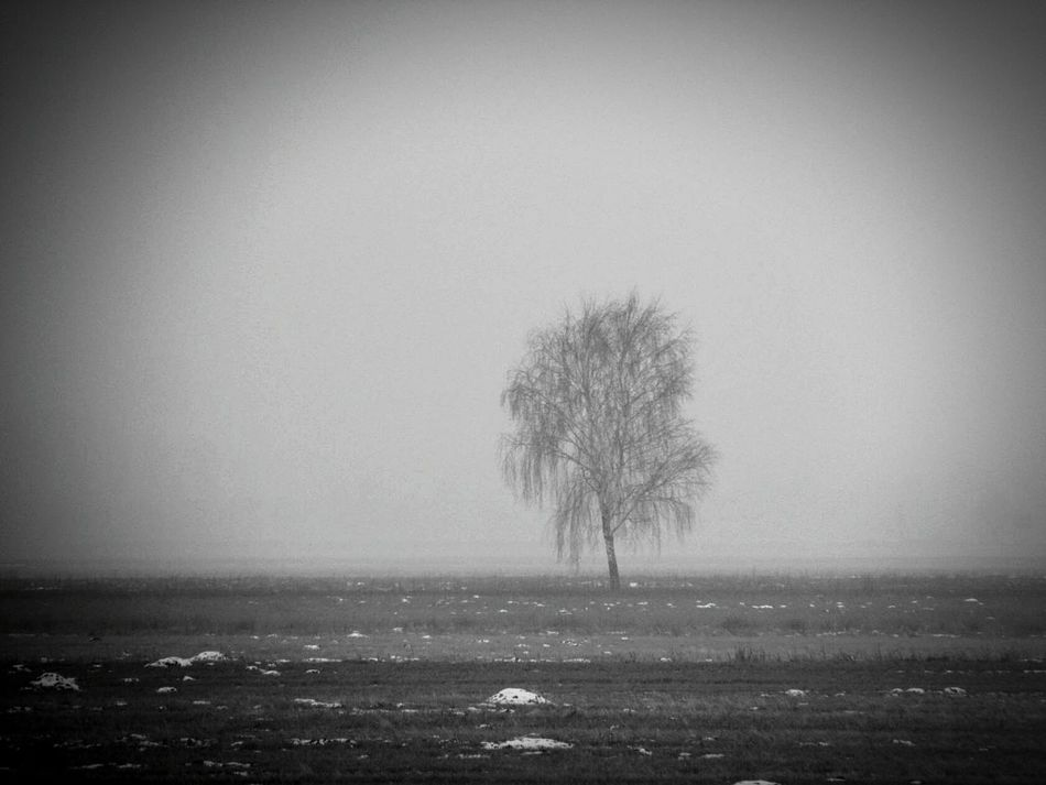 Tree Nature Fog No People Tranquility Outdoors Landscape Hazy  Beauty In Nature Single Tree Day Sky Lone Photooftheday Like4l Photo Photoshoot Followtofollowback Followback Like Like4like Followme Tree Photography Close-up