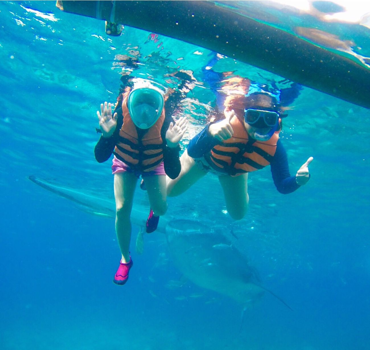 Enjoy The New Normal Friendship Underthesea Whaleshark Adventure Beautyofnature Yolo Fununderthesun Bucketlist