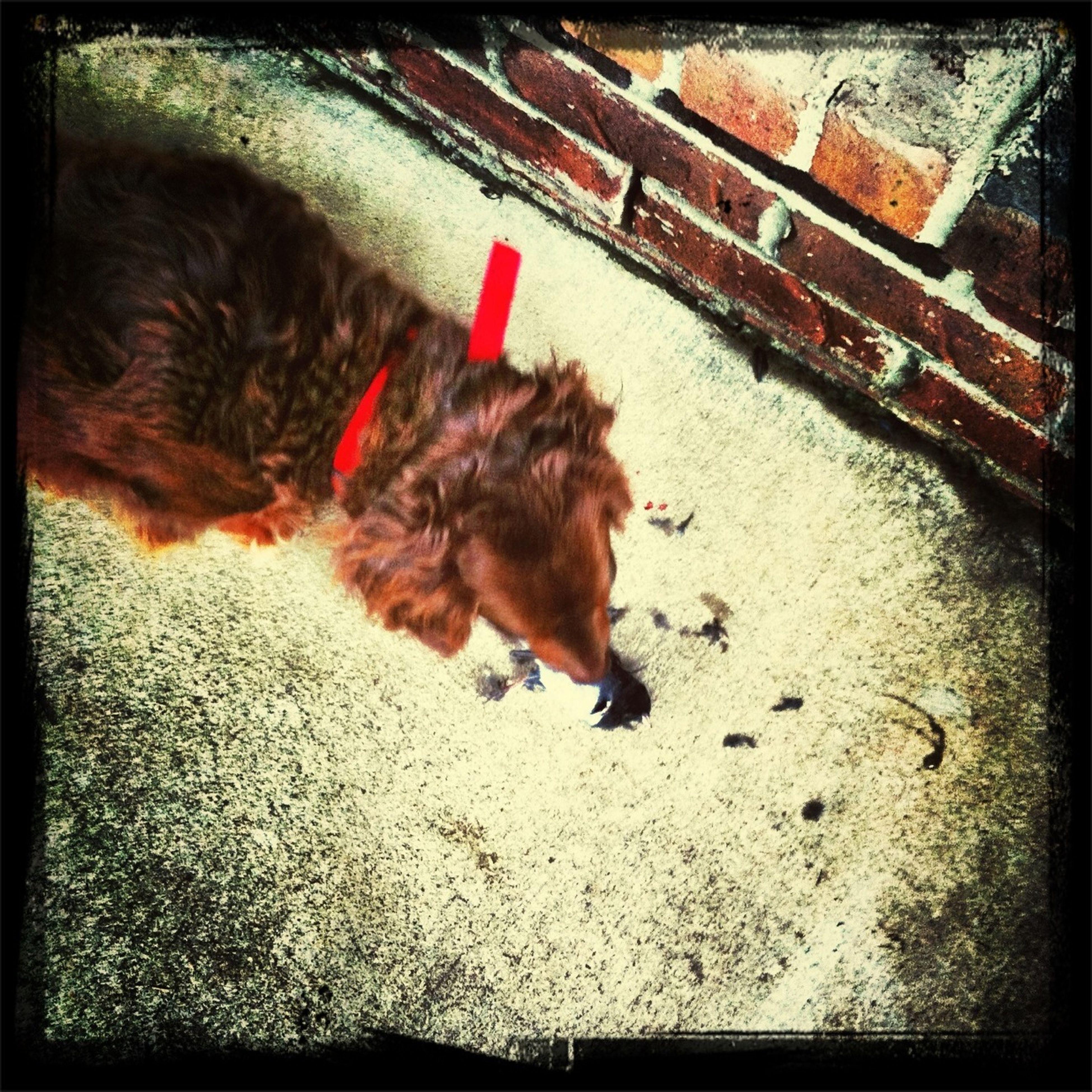My dog caught a bird earlier today...
