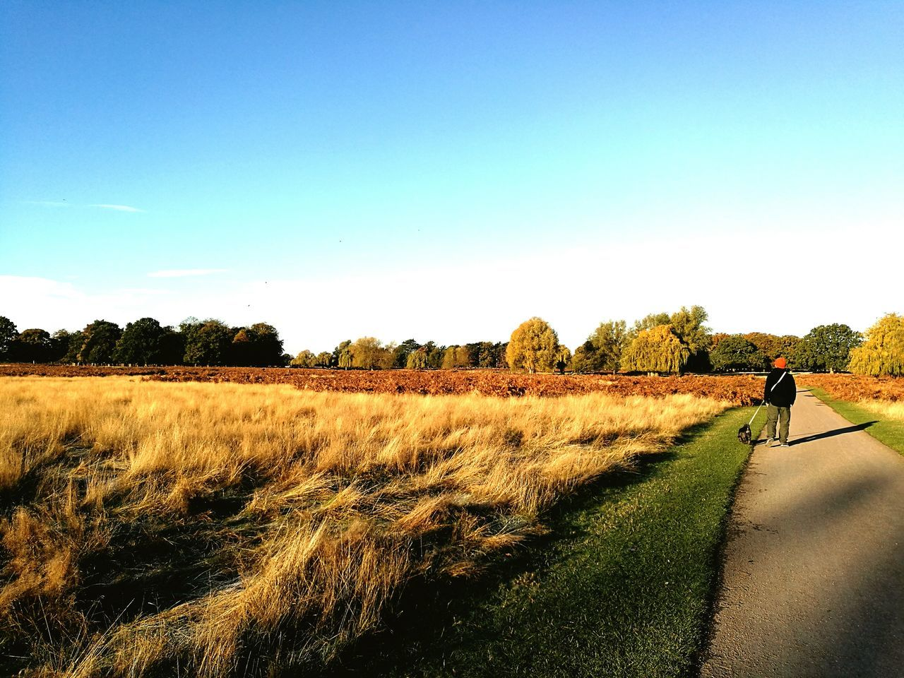 Sky Outdoors One Person Dog Walking Onemanandhisdog Autumn Colors Bushy Park Fall Expanse Autumnlight Park Royalpark England Surrey Surrey Countryside London Leicacamera Huawei P9 Leica Leica Lens HuaweiP9 Huaweiphotography