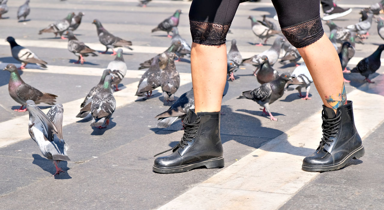Animal Themes Animals In The Wild Bird Boots Day Human Leg Low Section Milano One Person Outdoors People Piazza Del Duomo Pigeons Real People Sunlight The Street Photographer - 2017 EyeEm Awards