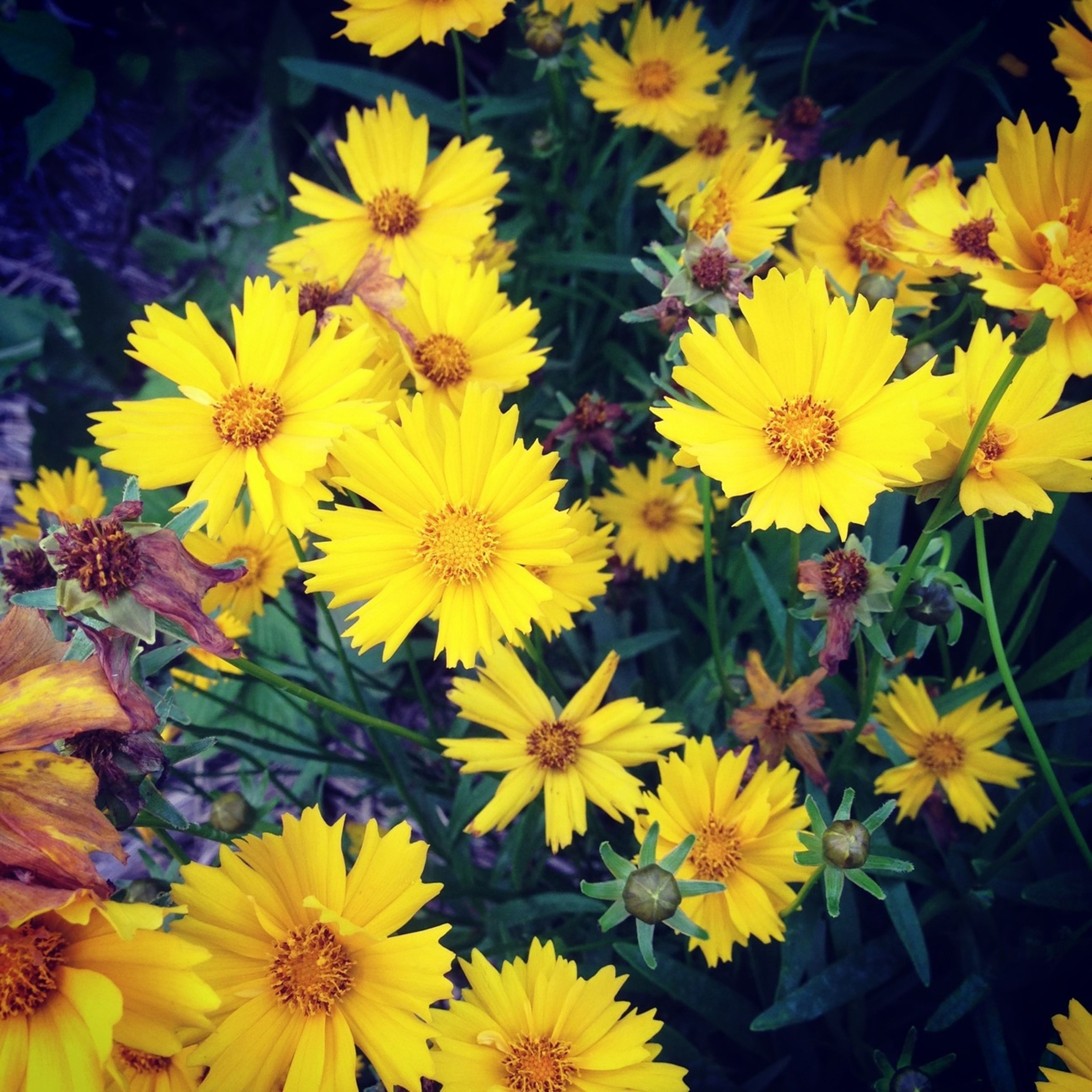 flower, yellow, freshness, petal, fragility, flower head, growth, beauty in nature, blooming, plant, nature, high angle view, pollen, close-up, in bloom, outdoors, day, abundance, leaf, park - man made space