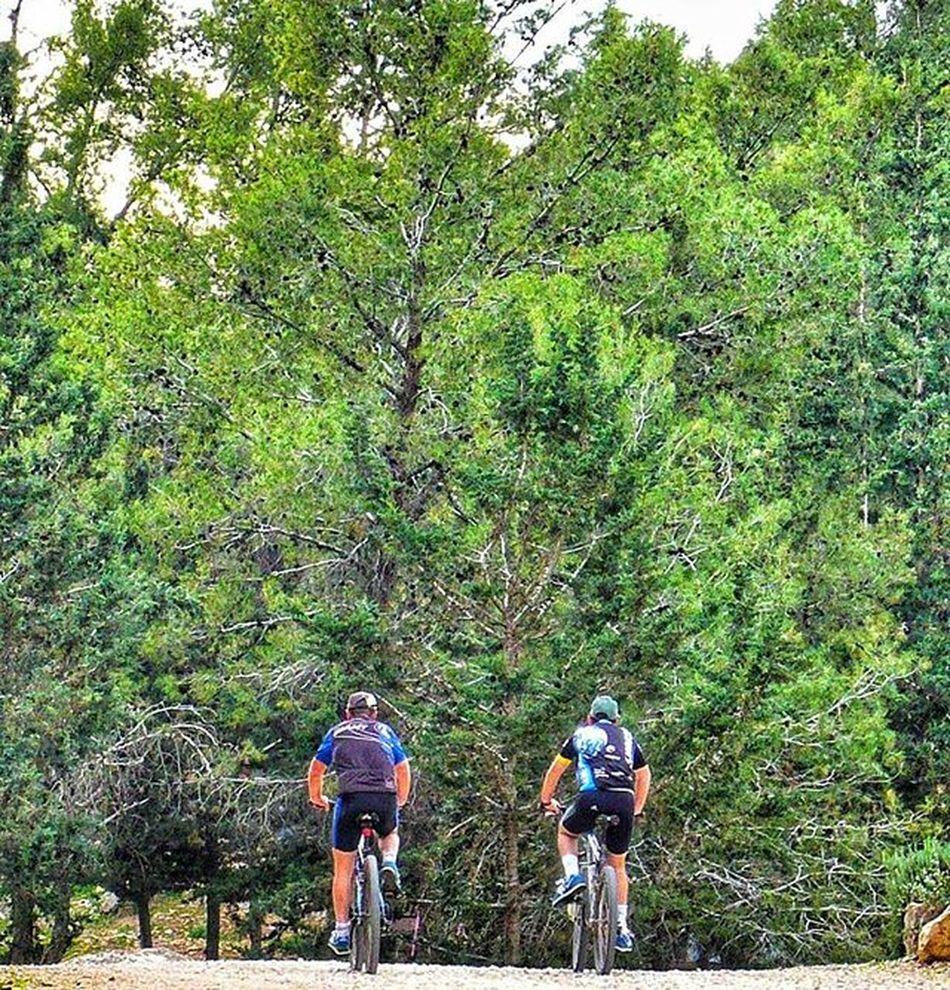 Выходные Лес велоспорт Спортсмен спорт отдых поДороге Sport Bicycle Weekend Forest Activerest Instagram_israel Insta_Israel Myisrael Instagram_israel Instagram_israel_ Ig_israel World_best Instaphoto Life Occasionally