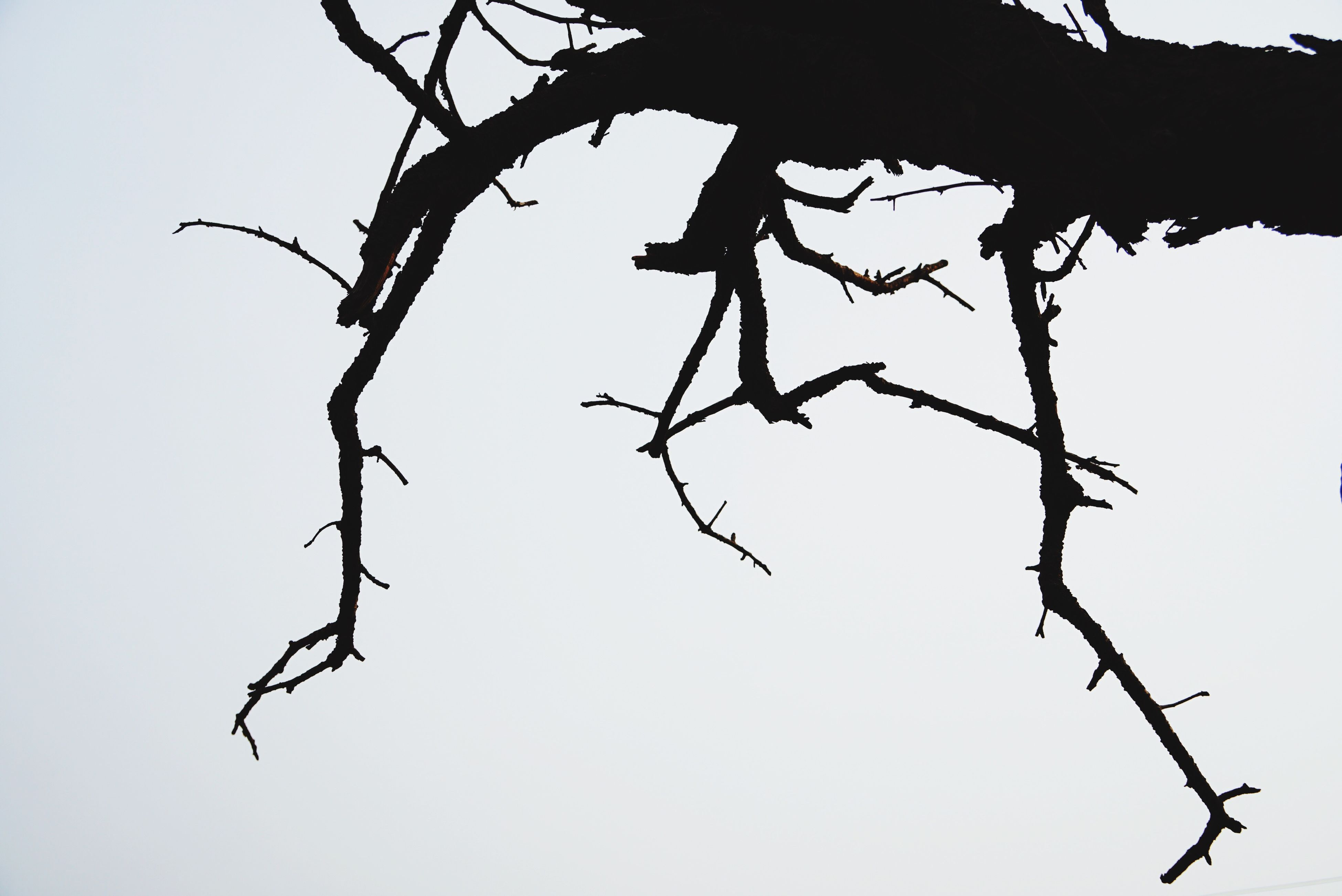low angle view, nature, no people, branch, tree, outdoors, sky, twig, silhouette, fragility, beauty in nature, day, close-up