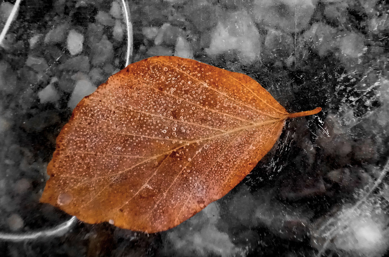 Leaf 🍂 Leaf On Ice Bubbles... Bubbles...Bubbles.... Frozen Leaf Frozen Photography Macro Photography Nature Iced Ice Day Outdoors Beauty In Nature No People Light & Shadow 📷 Walchensee Gold Colored Gold Leaves Rocks In Water Rocks Ice Pebbles And Stones Gold Leaf Pebbles locking cute Nature photogra Goldphy Nature On Your Doorstep Frozen Leaf