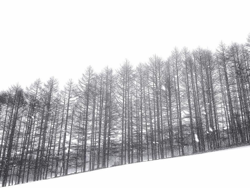 この雪が今日の軌跡を…すぐに覆い隠してくれる EyeEmBestPics Relaxing 楽しいひと時 Beautiful Snow  White Snow Snow White Peace And Love IPhoneography Beautiful Day Beautiful View Enjoying Life Beautiful Nature