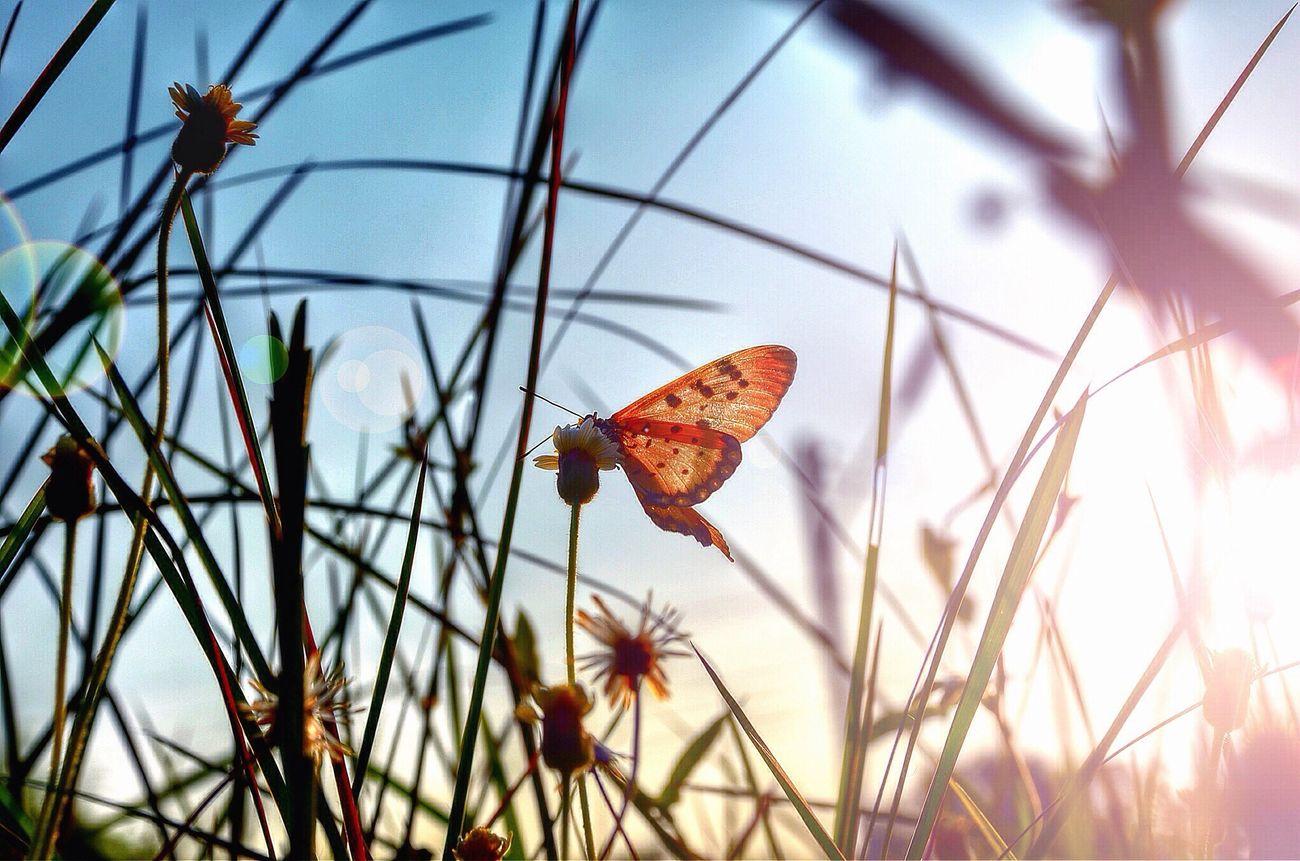Have a beautiful day EyeEm Best Edits Sunset #sun #clouds #skylovers #sky #nature #beautifulinnature #naturalbeauty #photography #landscape Nature_collection Enjoying Life