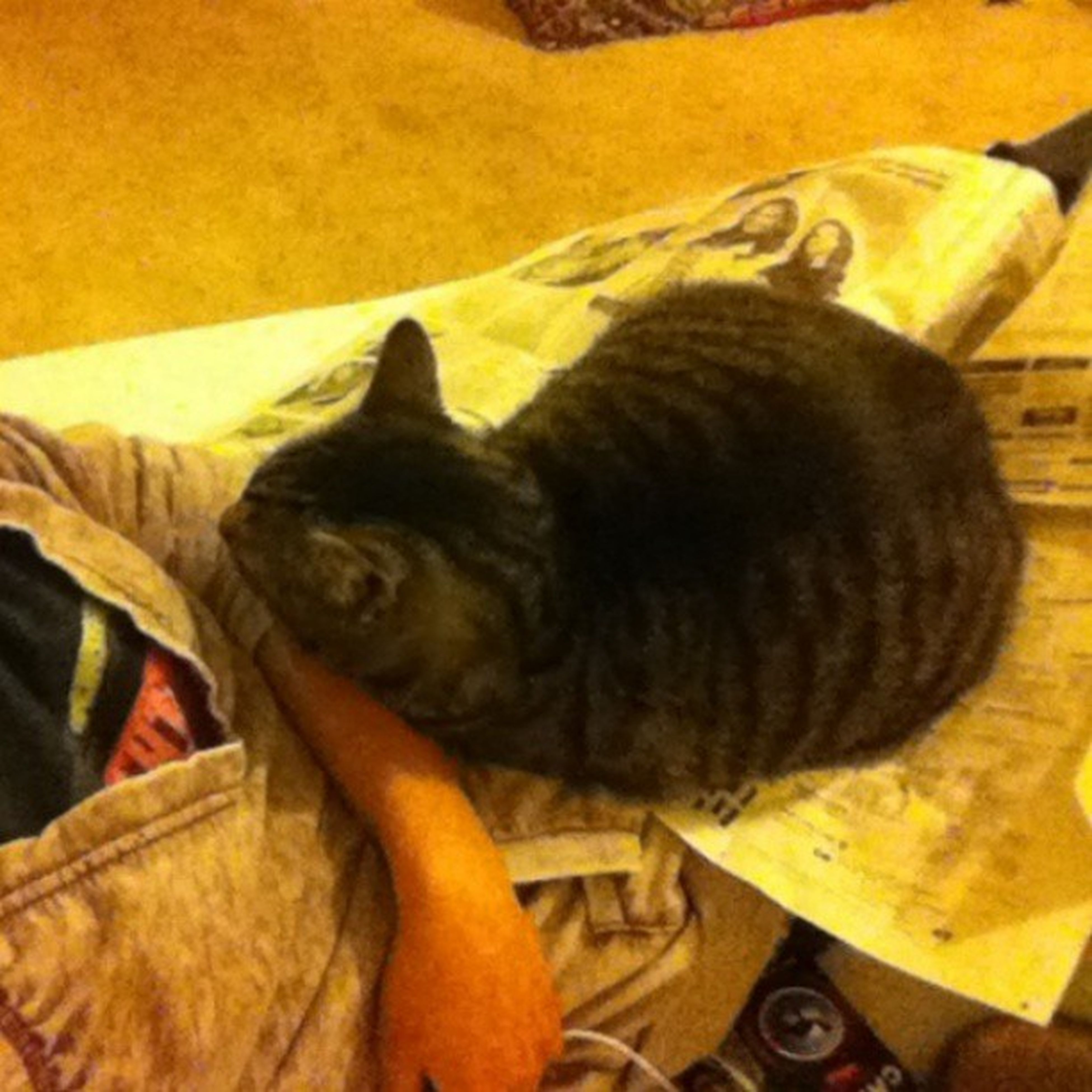 He doesn't like it when I read newspapers JealousKitty