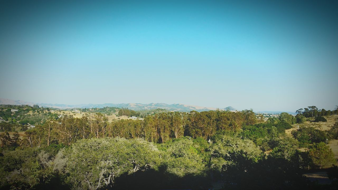 the view from my living room on an 95 degree day. Moutains Taking Photos EyeEm Nature Lover Eye4photography  Living Room Relaxing Beauty In Nature No Place Like Home Outdoor Photography Life Trees Sky Oak Trees Eucalyptus Tree Home And Garden Retirement