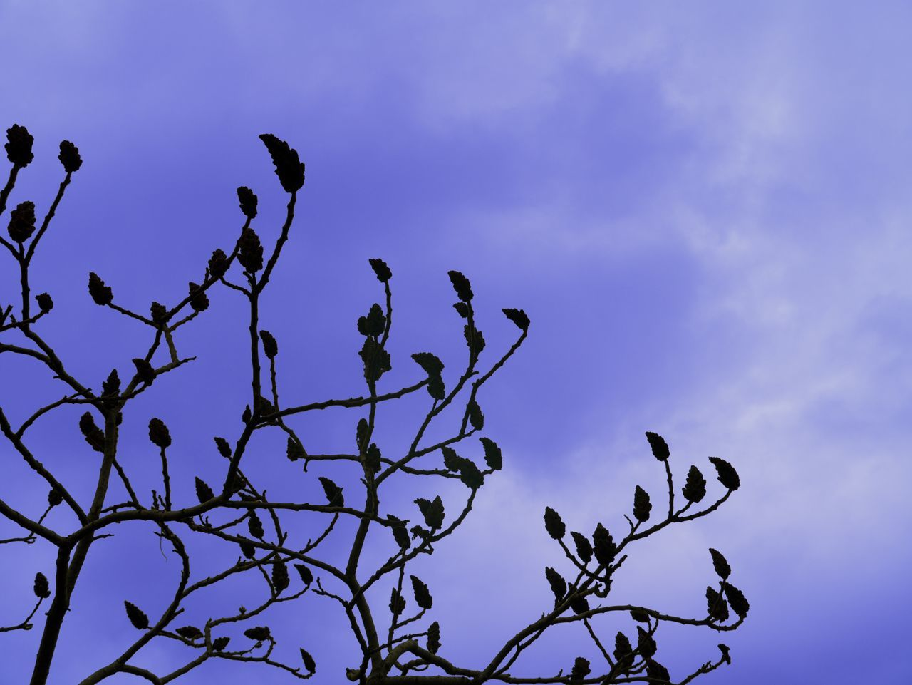 Bare Tree Blue Effect Blueeffect Branch Clouds & Sky Growth Levels Low Angle View Nature Nature Photography Naturelovers Outdoors Silhouette Sky