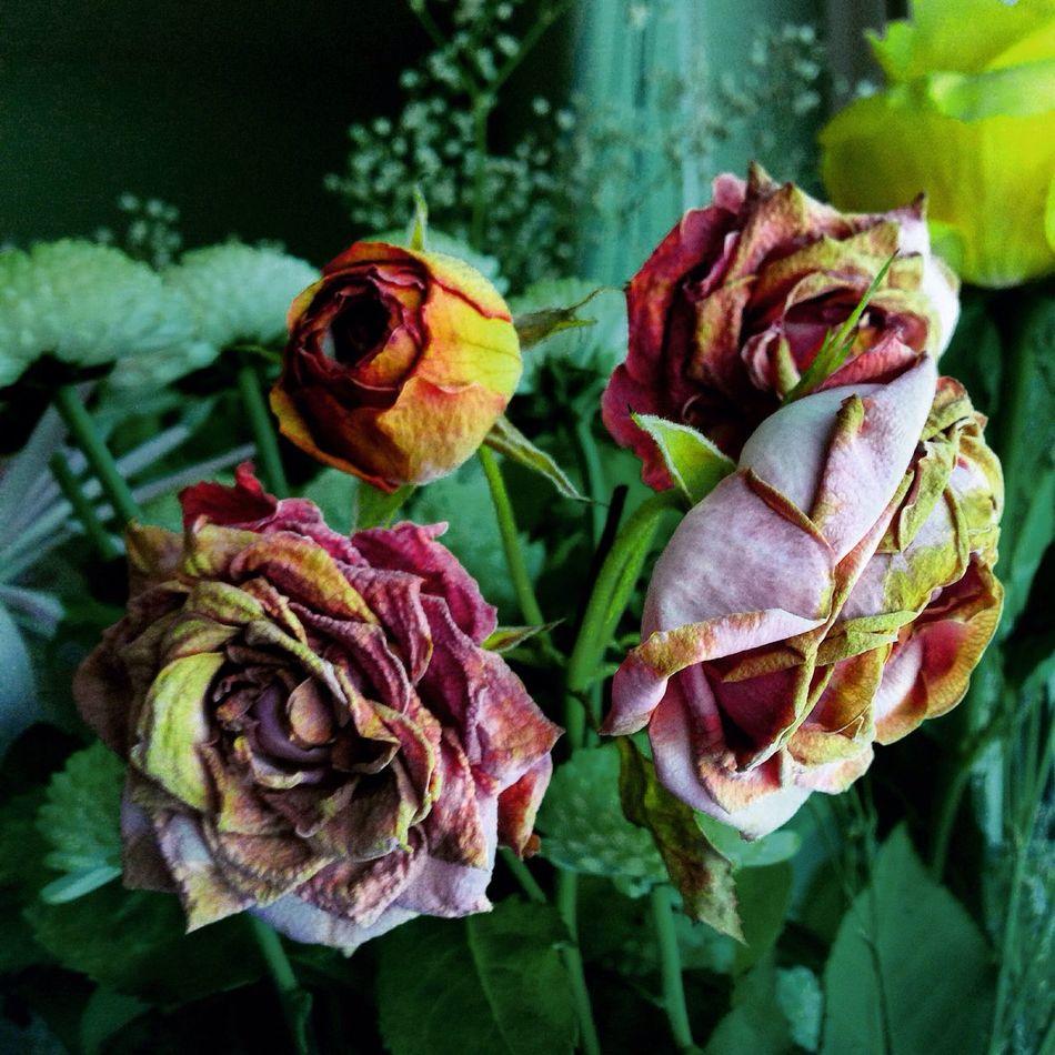 Flowerporn Fowers @Gypsyculu