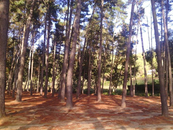 Tomada En Santa Susana Girona