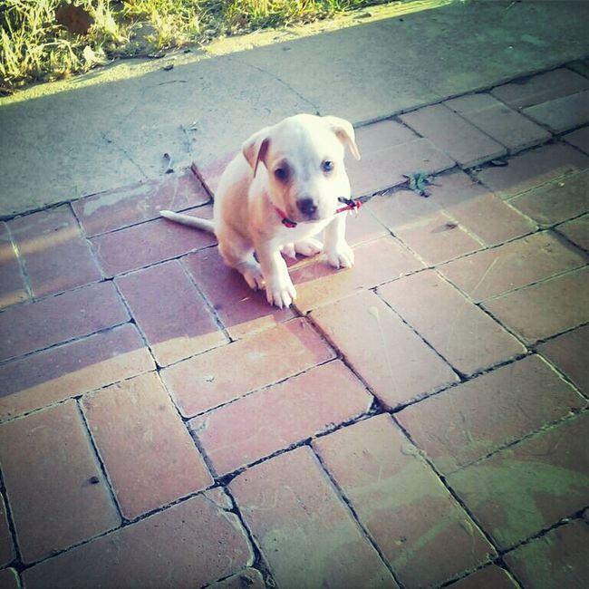 New Family Member <3
