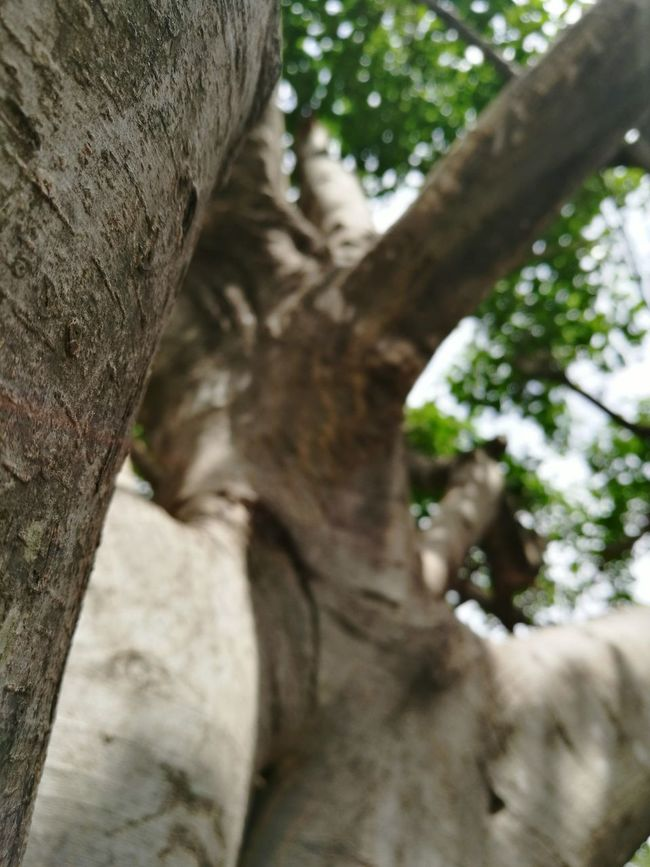 Tree Branches Treelovers Diffused Diffusion Trees And Nature Low Angle View Tree Trunk Tree Branch Tree_collection  Treelined Treecollection Treetastic Trees