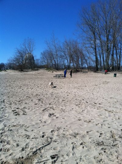 Dog beach North Shore Meet-Up