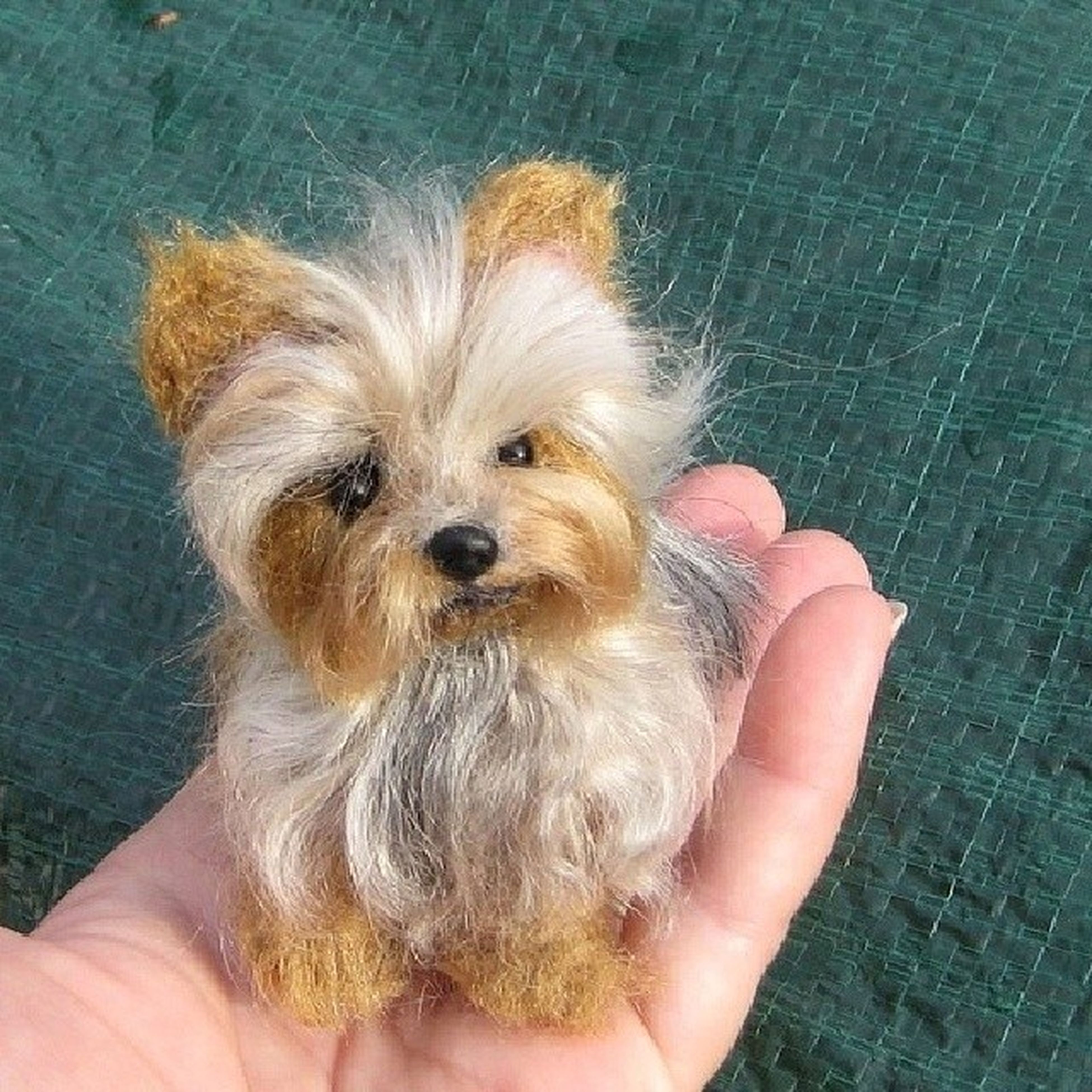 person, animal themes, one animal, holding, pets, part of, domestic animals, personal perspective, human finger, unrecognizable person, indoors, cropped, lifestyles, mammal, young animal, high angle view, dog