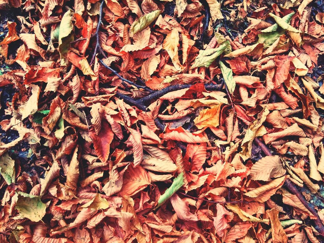 The Colors Of Autmn Fall Leaves Photoshoot By Lg G3